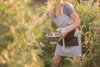 woman harvesting vegetables in a summer garden