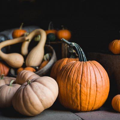 still_life_pumpkins_by_Boston_family_photographer_Amy_Murgatroyd