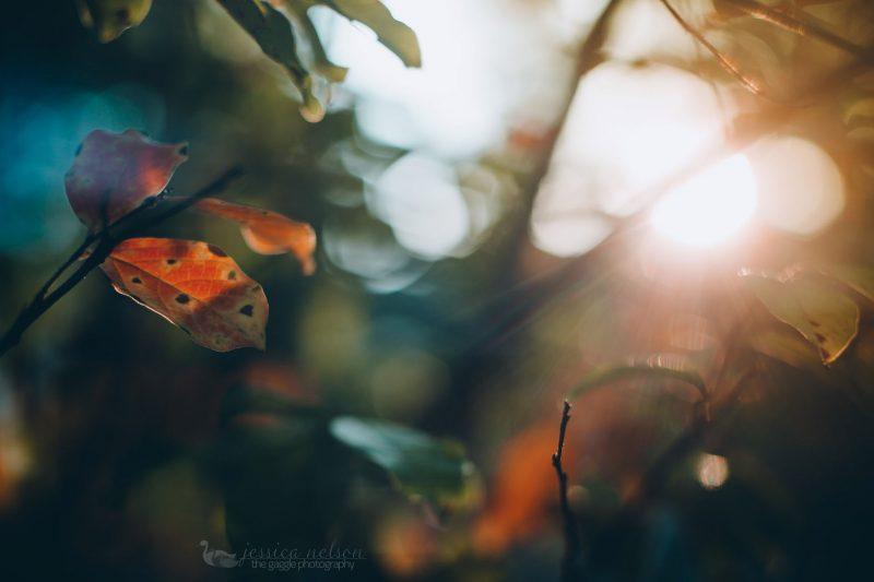 leaves freelensed