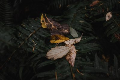ebony-logins-clickin-moms-daily-project-wedding-victoria-bc-fall-winter-leaves-yellow-green-fern