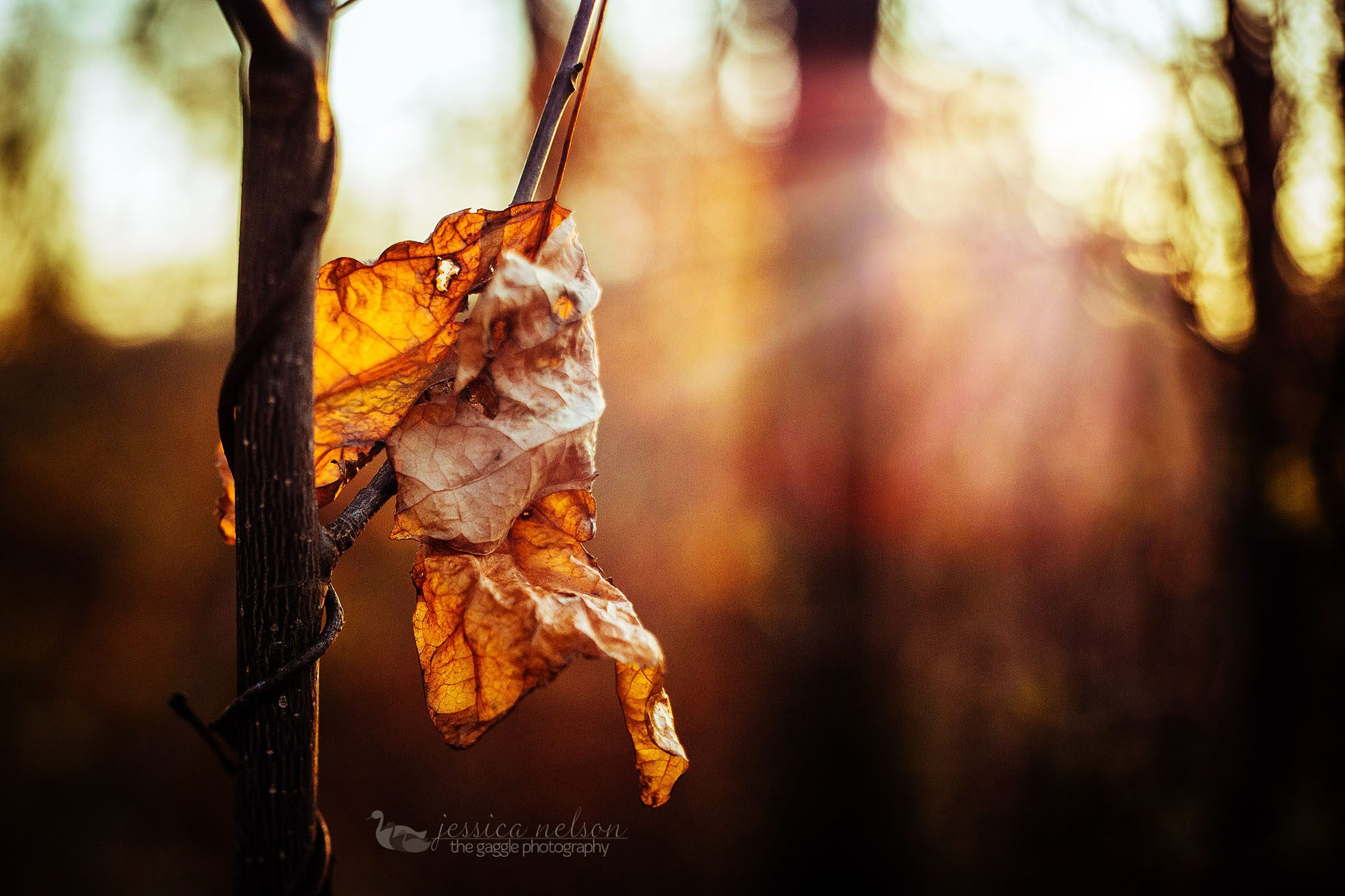 freelensed dead leaf