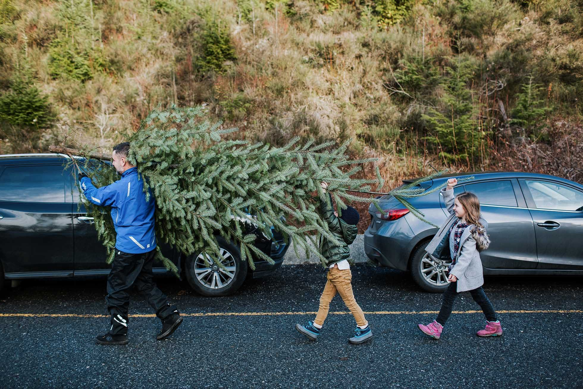 A family carries their fresh Christmas tree back to the car