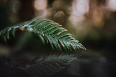ebony-logins-clickin-moms-daily-project-wedding-victoria-bc-fern-leaf-green-reflection-iphone-bokeh
