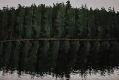 ebony-logins-clickin-moms-daily-project-wedding-victoria-bc-double-exposure-fern-green-lake-trees