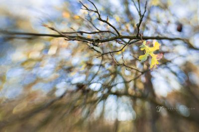 lens baby view of lingering leaves on branches