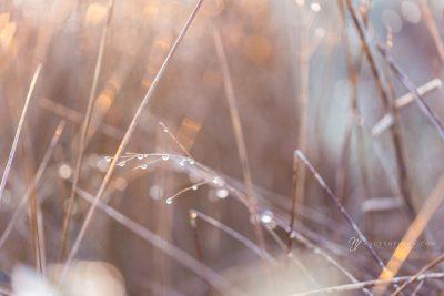 raindrops on weeds backlit