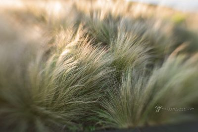 soft green seagrass with lens baby