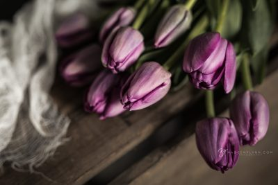 bouquet of purple tulips on box