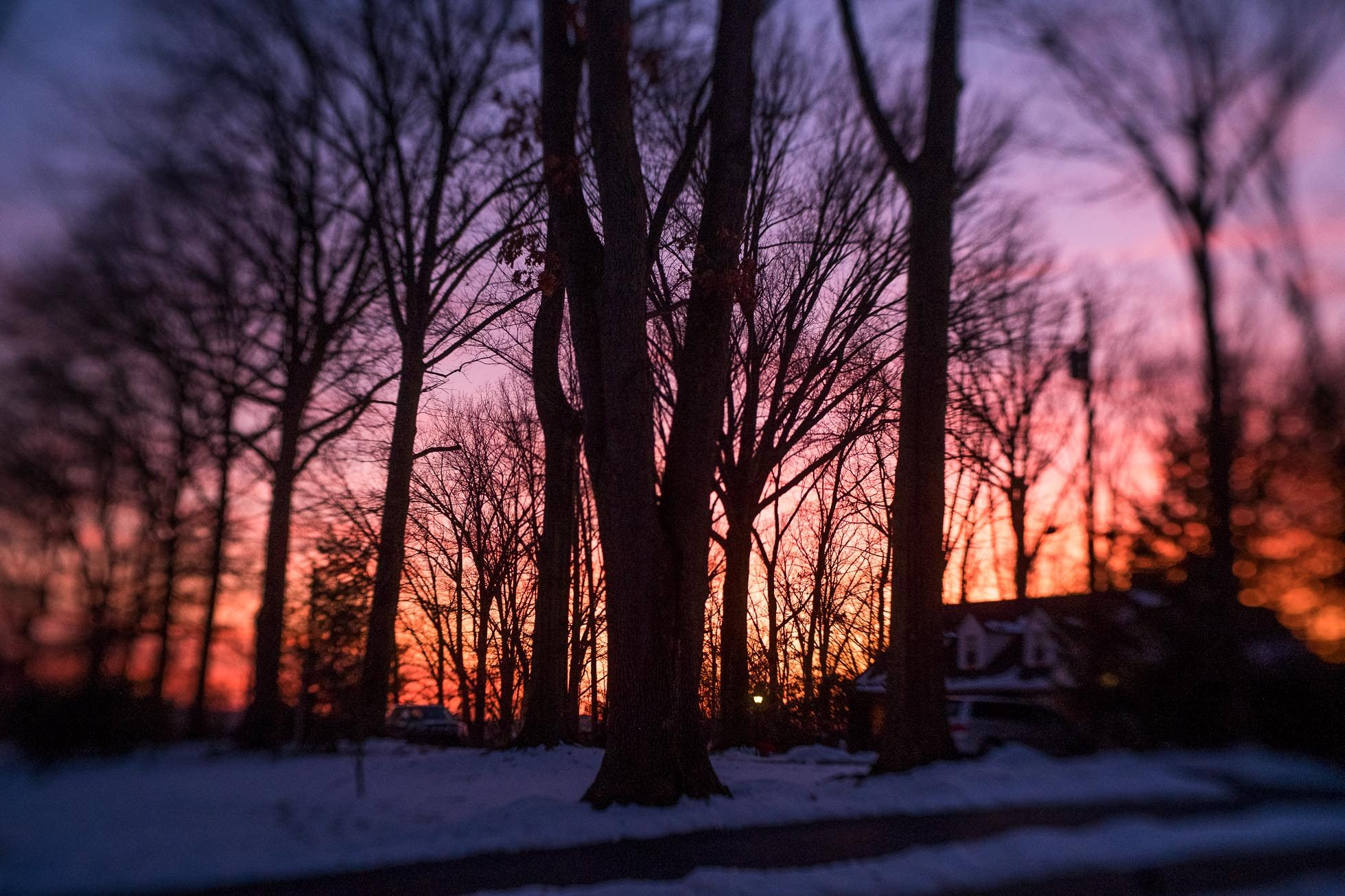 winter sunset behind the trees