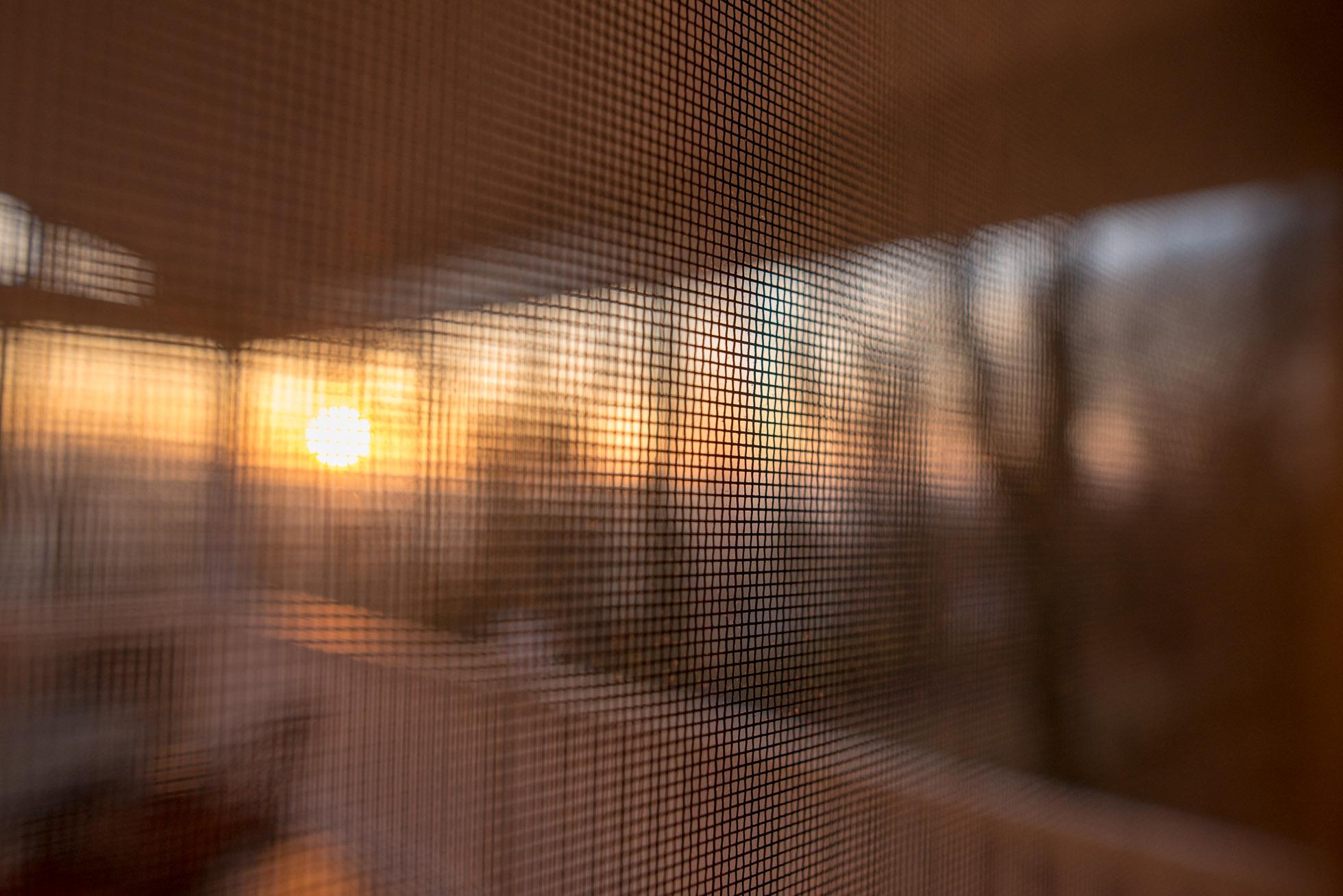 Sunrise Through The Screen Door By Andrea Moffatt