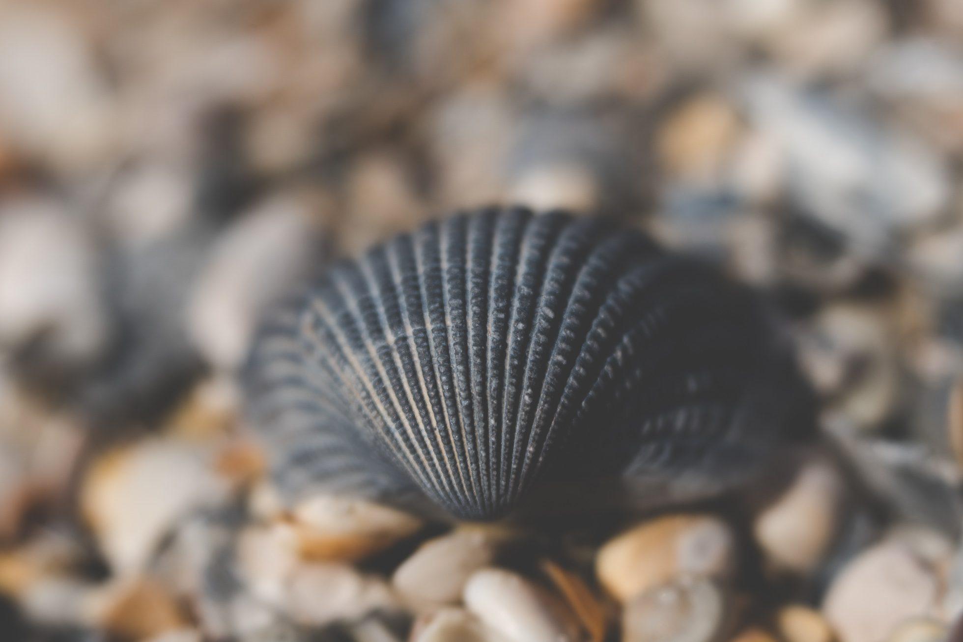 macro sea shell at beach by tiffany kelly