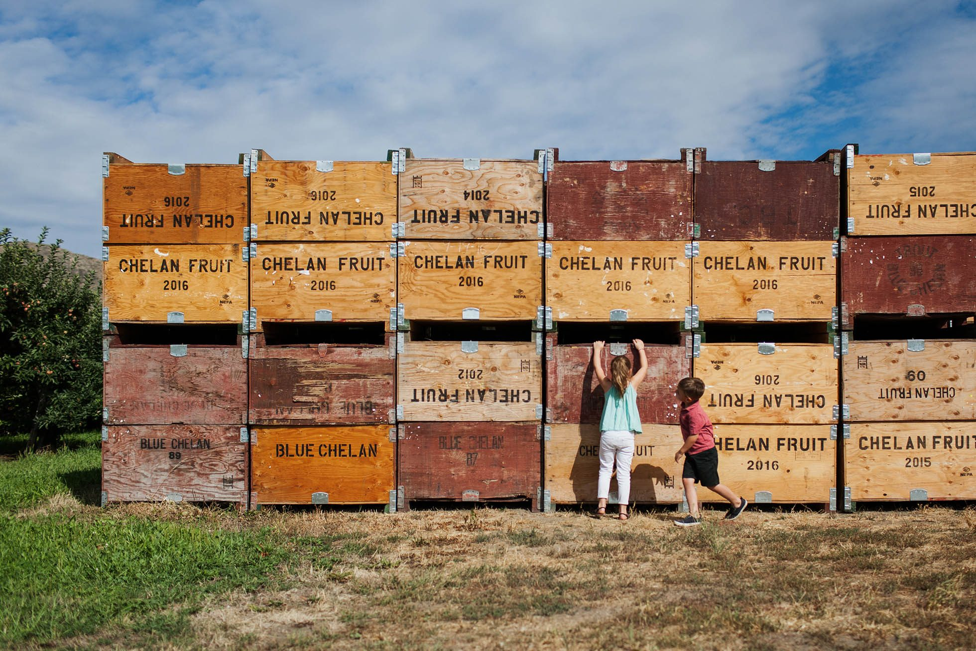 Kids playing near fruit market boxes stacked high in the orchard.
