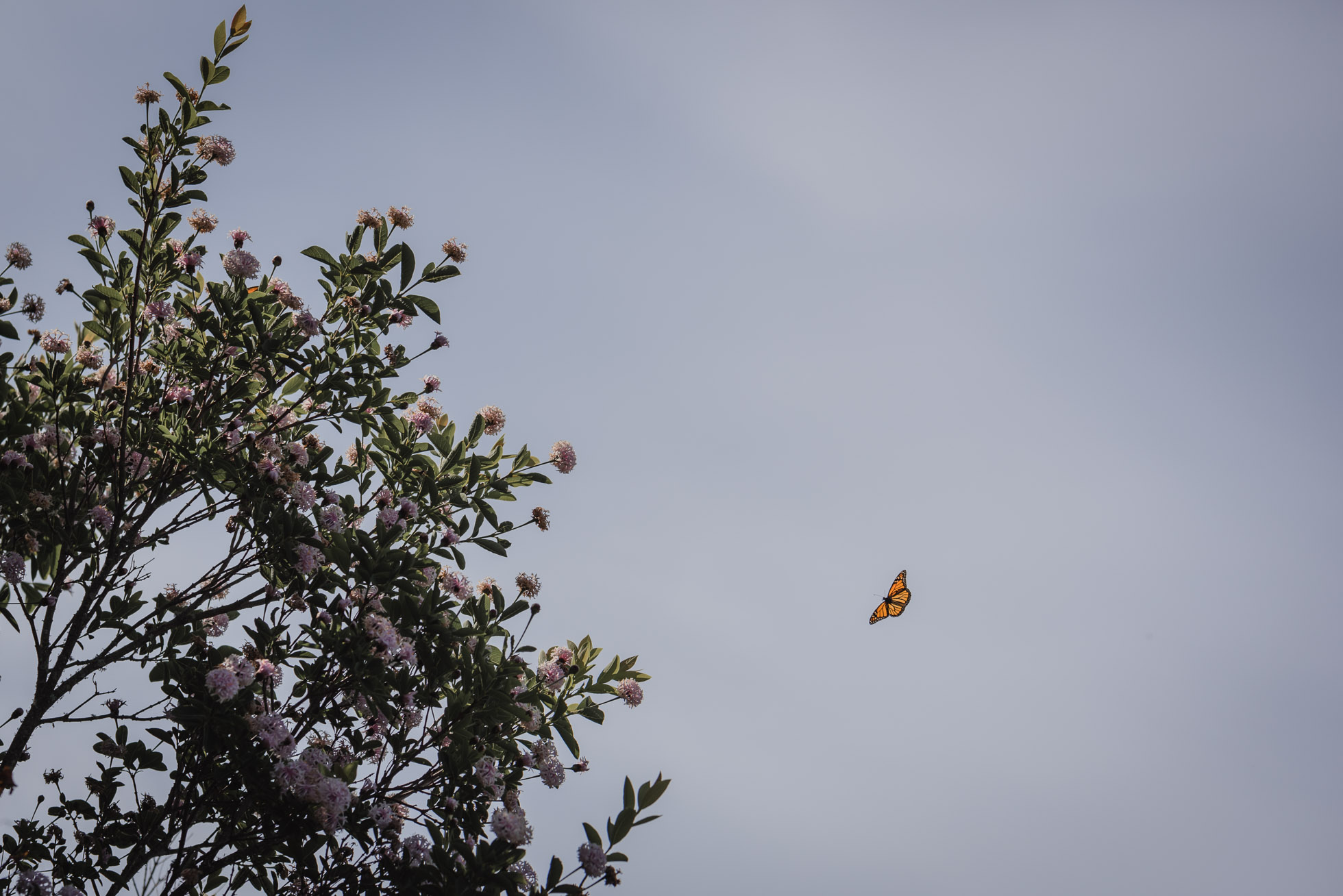 Butterfly in a summer sky by Aimee Glucina