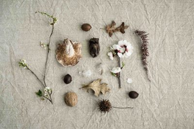 flat lay of items found on a nature walk