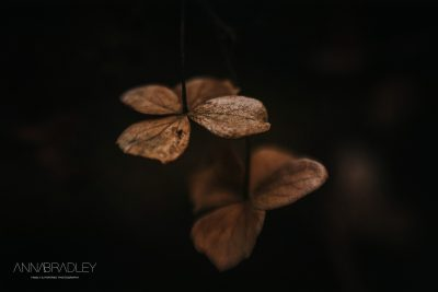 Brown petals photography by Anna Bradley