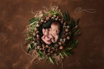 Newborn baby in a gumnut wreath