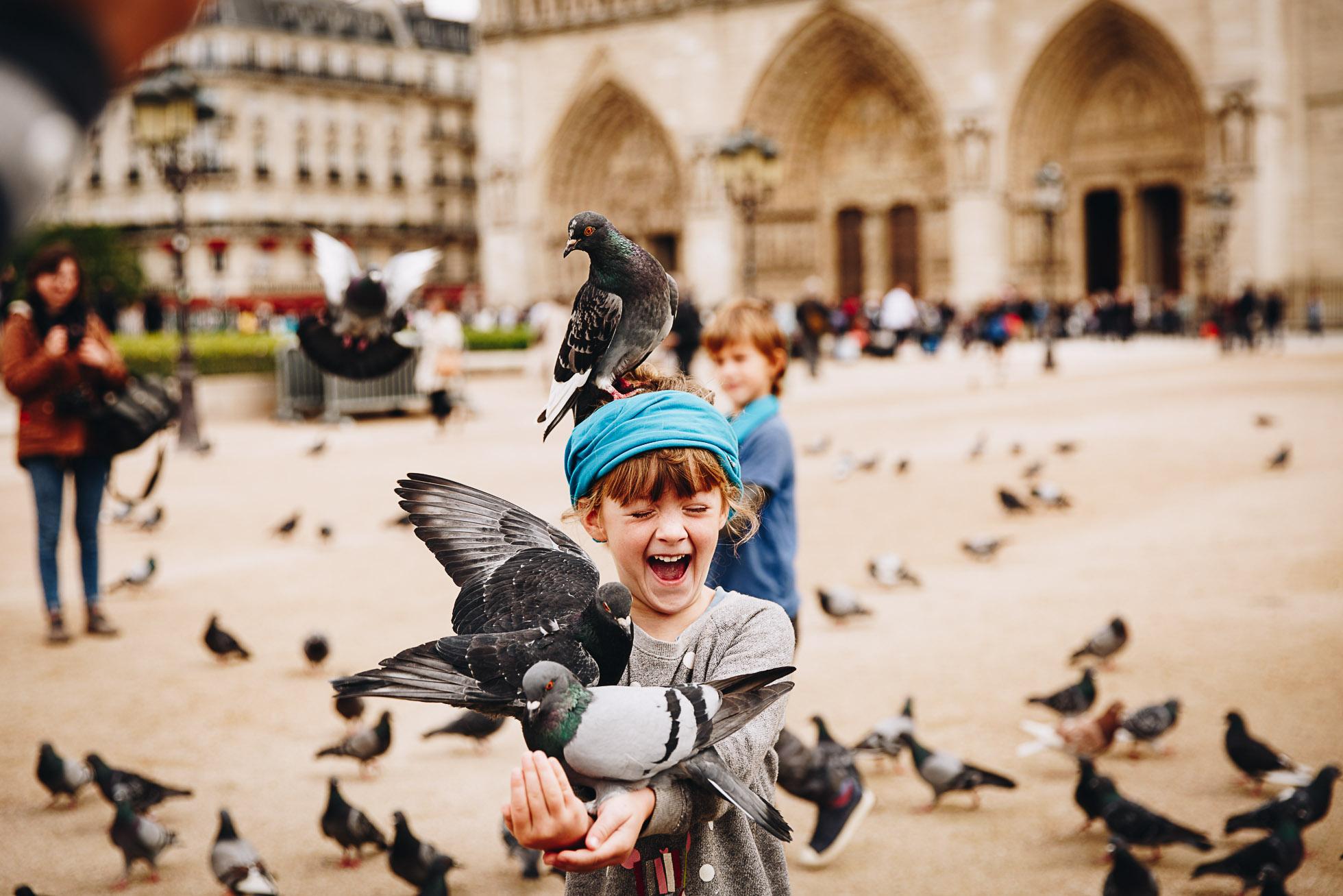 Paris pigeon play