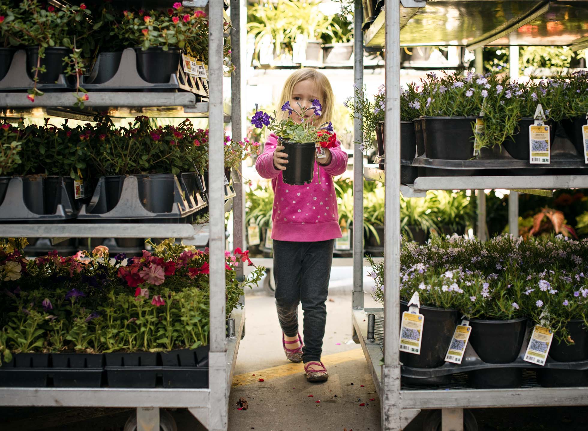 girl in pink shopping for flowers at lowes you like this purple one child girl shopping lowes flowers plants gardening edmond ok photographer oklahoma city natural light photographer kate luber photography