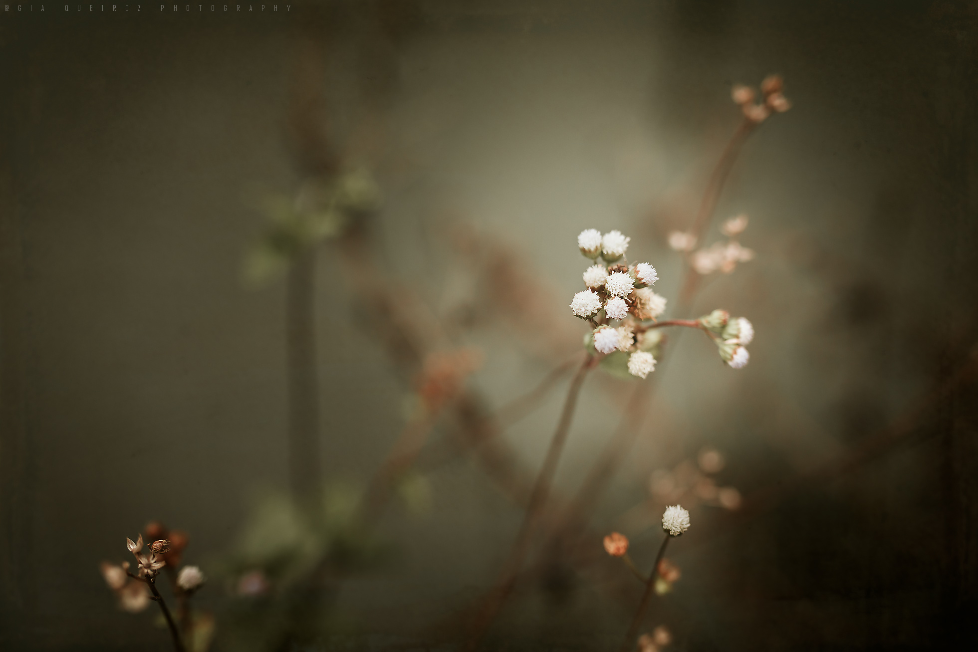 Small flowers in the garden by Gia Queiroz