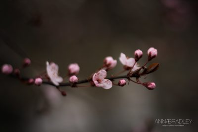 Blossom Spring Amersham Buckinghamshire photographer