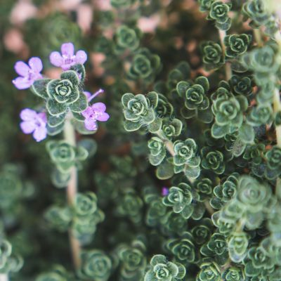tiny_flowers_macro_lensbaby_edge_80 | really tiny_click-Pro_daily_project_by Eileen Critchley