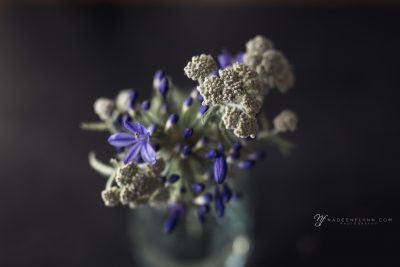 gray and purple flowers