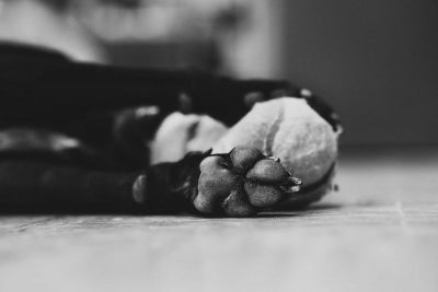 black and white photo dog paws