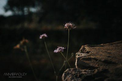 Flowers Amersham Buckinghamshire photographer