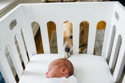 dog peaking into baby crib