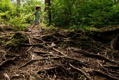 boy walking over tree roots on hike in the woods
