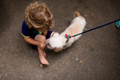 curly haired boy letting a small dog sniff his hand