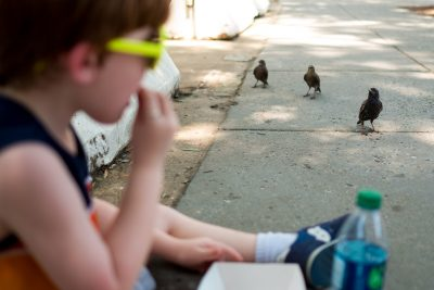 birds in the city wait for little boy to give them food