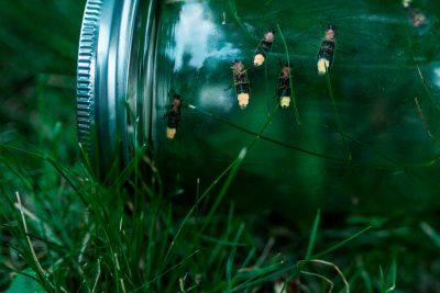 macro image of fireflies in a mason jar