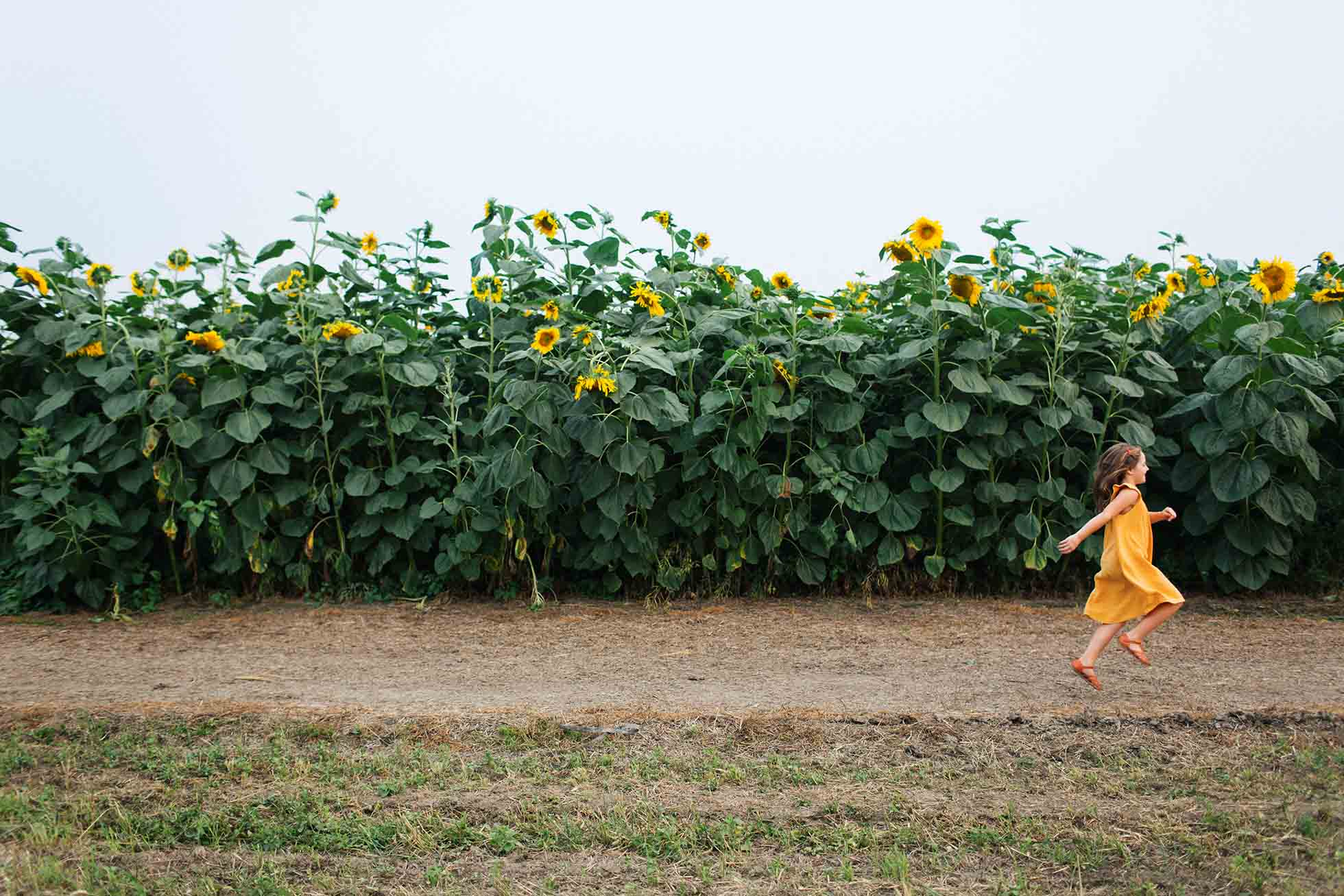 Little girls skips past a field of sunflowers in a matching yellow dress.
