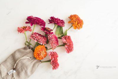 garden pretties of bright orange and pink zinnias