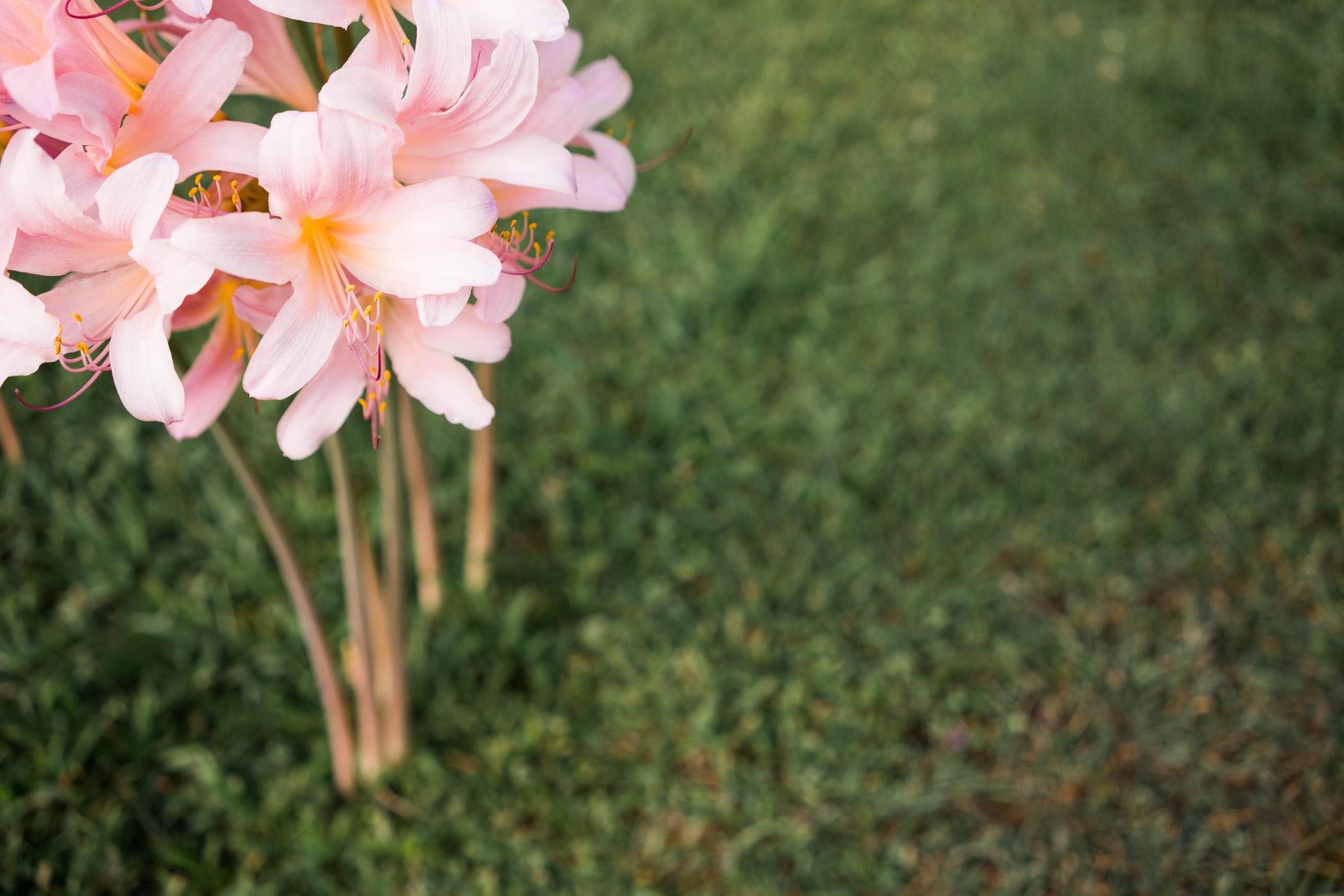 Tall Flower By Kaela Elliott