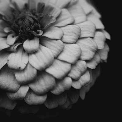 black_and_white_square_format_white_flower_macro_lensbaby_velvet56 | fade into darkness_click-Pro_daily_project_by Eileen Critchley