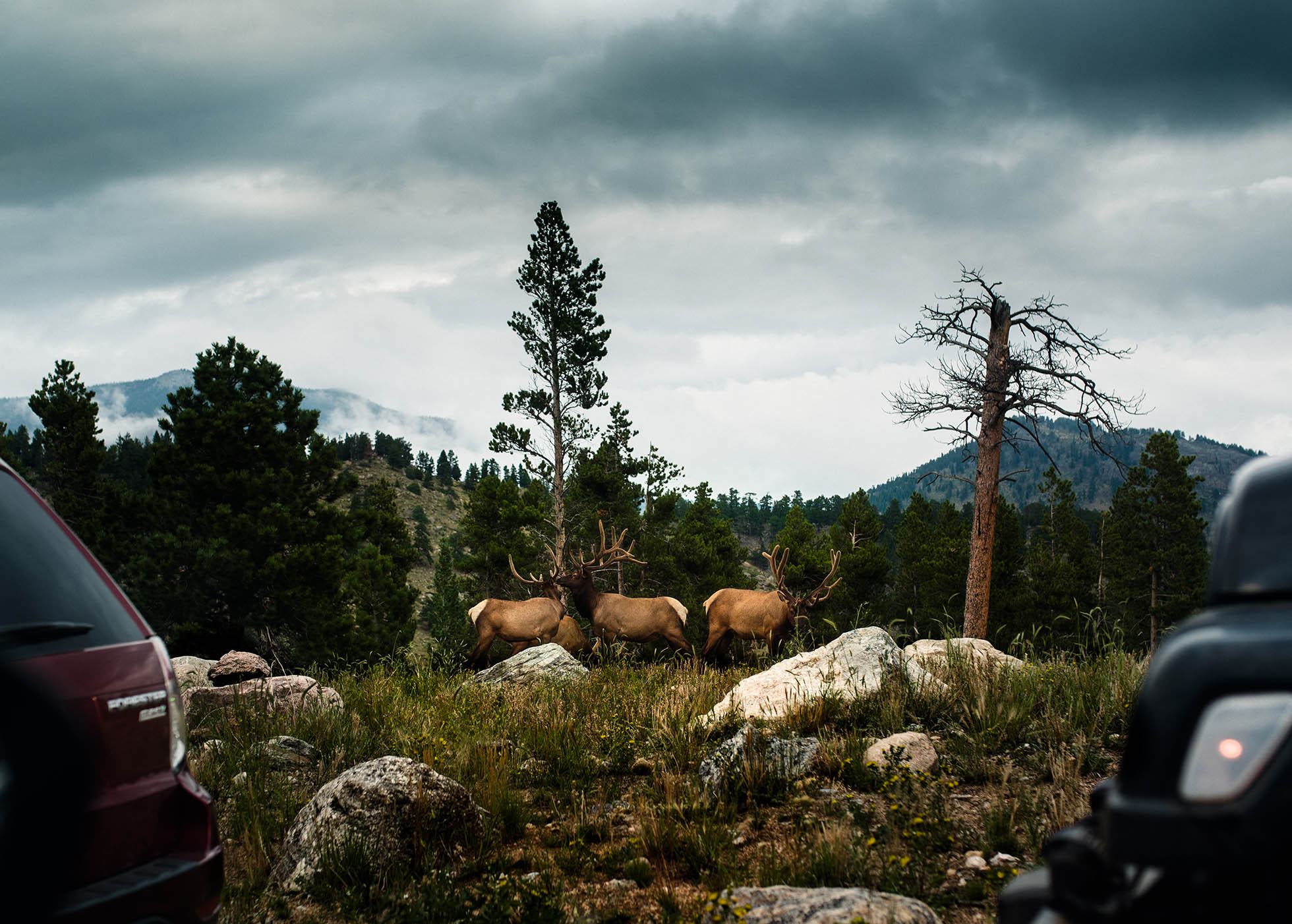Documentary Photographer captures a photo of elk gathering in the evening among other onlookers.