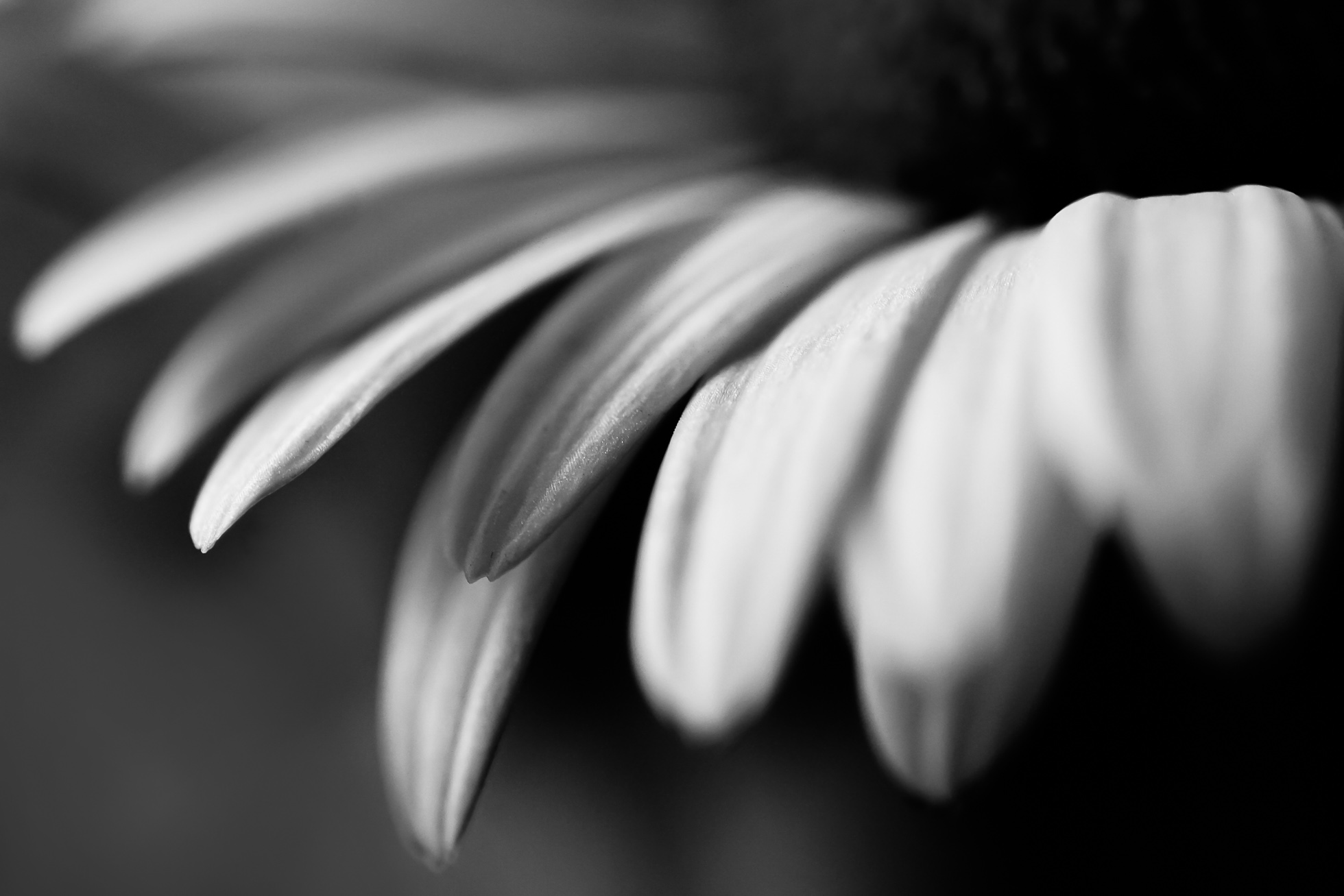 Black And White Photography Simple