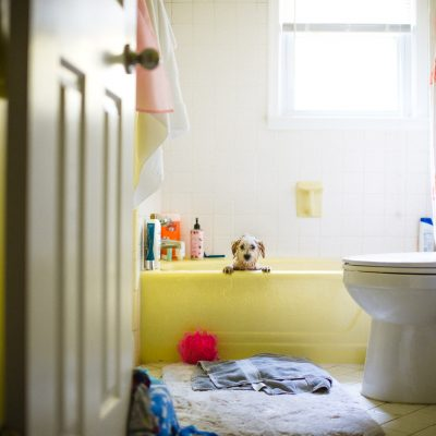 Full-Color-Documentary-Photo-with-Natural-Light-and-Framing-of-Havanese-Puppy-Getting-Bath-in-a-Yellow-Tub-by-Sarah-Wilkerson-1512
