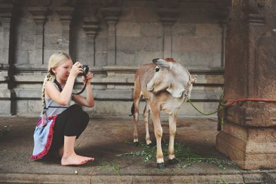 A child takes a photo of a cow at a temple in India