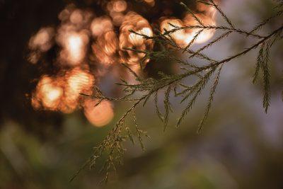sunset and leaf macro