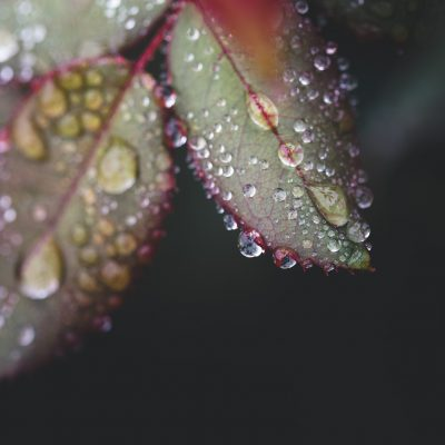 leaves_after_rain_macro | so.much.rain_click-Pro_daily_project_by Eileen Critchley
