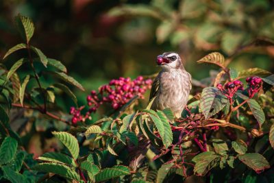 bird with berry in beak fall colors