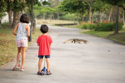 kids watching a monitor lizard cross the path