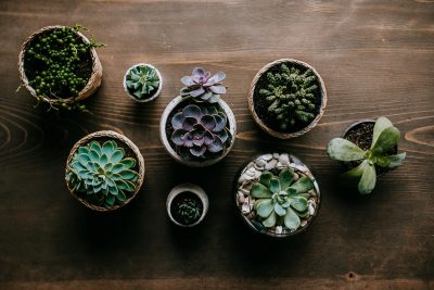 Succulents in all different shapes and sizes.