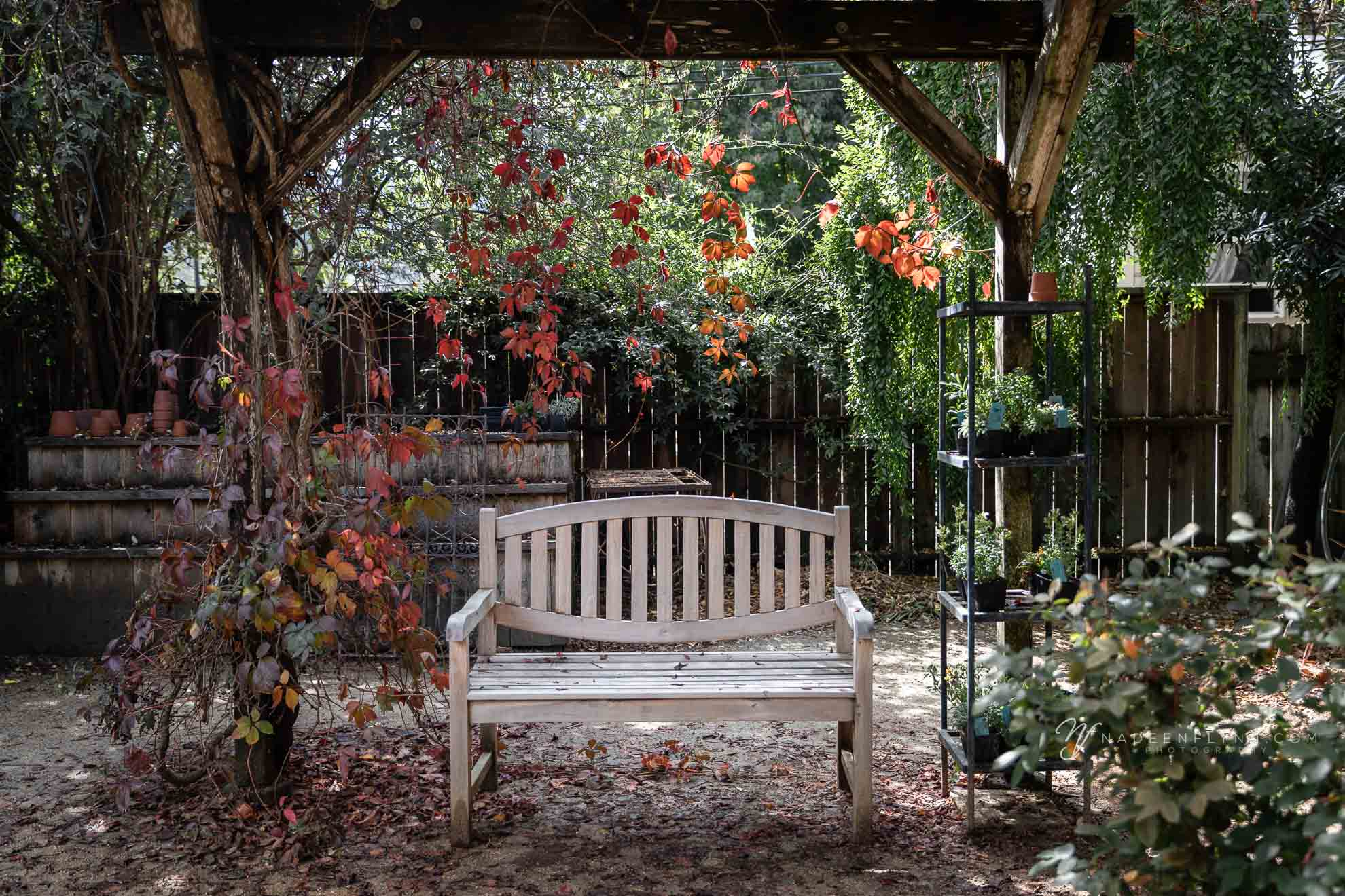 bench to sit down on beneath arbor with orange leaves