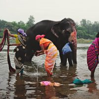 3 women wash clothes in a river in karnataka, India as a man scrubs his elephant in the background - Everyday India, by Kirsty Larmour