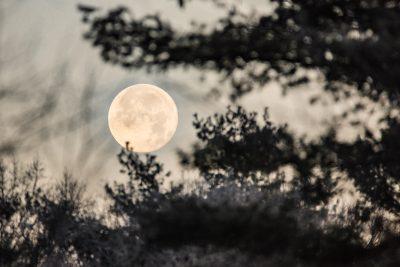 kathyroberts_full-moon