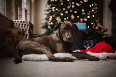 lifestyle-photo-sisters-dogs-under-the-tree-by-monica-carlson-photography-2